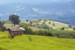 Farmer house in the rice field on the mountain Stock Photos