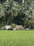 Farmer house in the tropics, India. A rice farmers house in India Stock Image