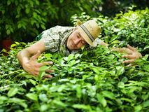 Farmer hugs his plants. In a greenhouse Stock Photos