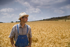 Farmer In A Wheat Field Royalty Free Stock Photography