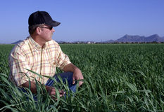 Free Farmer In Wheat Field Stock Photos - 8833923