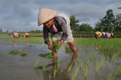 The farmer, indonesia stock photography