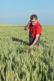 Farmer inspect wheat field Royalty Free Stock Photos