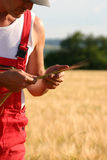 Farmer inspecting the barley. Farmer controlling the barley Royalty Free Stock Photos