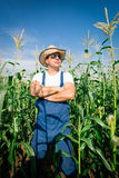 Farmer inspecting corn plant Royalty Free Stock Photography