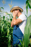 Farmer inspecting corn plant Royalty Free Stock Image
