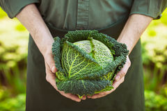 Farmer with kale Royalty Free Stock Photo