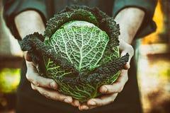 Farmer with kale. Organic vegetables. Farmers hands with freshly harvested vegetables. Fresh organic kale stock image