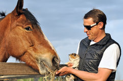 Farmer and kitten feed horse Stock Photo