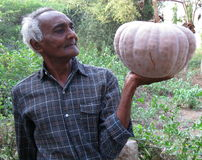 Farmer with a large pumpkin Royalty Free Stock Image