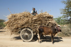 Farmer in Bagan Stock Images