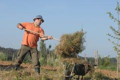 Farmer loading a wheelbarrow with a haystack Stock Photos