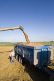 Farmer looking at barley harvester Stock Photo