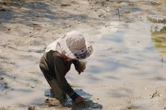 Farmer is looking fishg in the mud royalty free stock photo