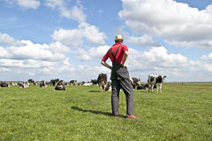 Farmer looking at his cows Royalty Free Stock Images