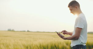 Farmer looking at his field of rye and using his digital tablet stock video