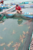 A farmer is looking at his lobster cage farming in the bay of Vung Ro Royalty Free Stock Images