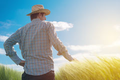 Farmer looking at the sun on the horizon. Over cultivated wheat crops field Stock Images