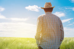 Farmer looking at the sun on the horizon. Over cultivated wheat crops field Royalty Free Stock Photos