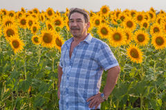 Farmer looking at sunflower Stock Image