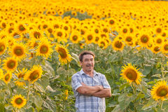 Farmer looking at sunflower Stock Photography