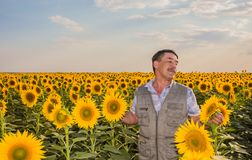 Farmer looking at sunflower Royalty Free Stock Photos