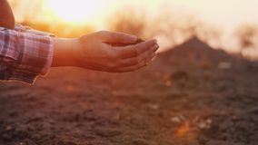 A farmer looks at the soil in his hands at sunset. royalty free stock photos