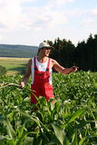 Farmer in maisfield. Photograph of a Farmer in a maisfield royalty free stock photo