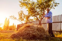 Farmer man gathers hay with pitchfork at sunset in countryside. Agriculture and farming concept. Harvest time stock image