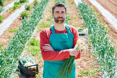 Farmer man harvesting onions in Mediterranean Stock Images