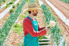 Farmer man harvesting onions in Mediterranean Stock Photo
