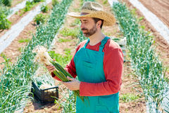 Farmer man harvesting onions in Mediterranean Royalty Free Stock Photography