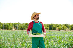 Farmer man harvesting onions in orchard field Stock Photos