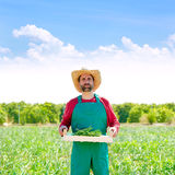 Farmer man harvesting onions in orchard field Stock Images