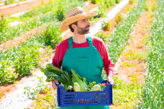 Farmer man harvesting vegetables in orchard Stock Photography