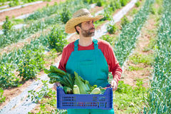 Farmer man harvesting vegetables in orchard Royalty Free Stock Photos