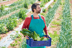 Farmer man harvesting vegetables in orchard Royalty Free Stock Images