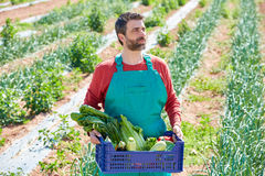 Farmer man harvesting vegetables in orchard Royalty Free Stock Image