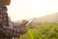 Farmer man read or analysis a report in tablet. Stock Photos