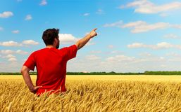 A farmer man standing in a field of wheat, pulls his finger to the sky. Conceptual composition. Copyspace royalty free stock images