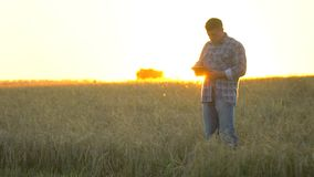 Farmer man with tablet in wheat field at sunset. Modern farming, advanced technology in agriculture. farmer man on wheat. Field using tablet computer. Harvest stock footage