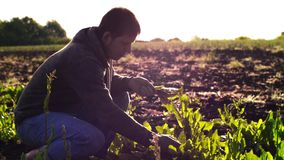 Farmer man tears sorrel from the beds and collects the leaves in a bunch. stock footage