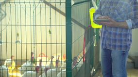 Farmer man using tablet computer, checking quality in poultry chicken farm, turkey farm, farming, poultry production. Farmer man using tablet computer, checking stock video footage