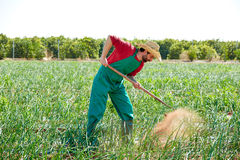 Farmer man working in onion orchard with hoe Stock Photo