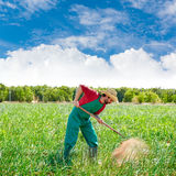Farmer man working in onion orchard with hoe Stock Photos