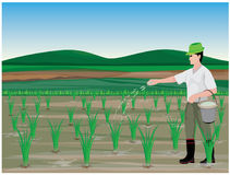 Farmer manure rice plant. Vector design Stock Image