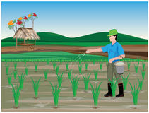 Farmer manure rice plant. Vector design Stock Images