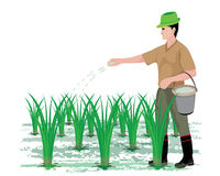 Farmer manure rice plant. Vector design Royalty Free Stock Photo