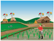 Farmer manure rice plant. Vector design Royalty Free Stock Images