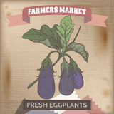 Farmer market label with eggplants on a branch color sketch. Royalty Free Stock Images